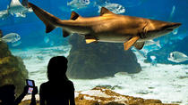 Barcelona Aquarium Skip the Line Ticket , Barcelona, Attraction Tickets