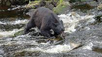 3-Hour Alaska Rainforest Hiking Tour in Tongass National Forest from Ketchikan, Ketchikan, Hiking & ...