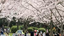 Cherry Blossom 'Hanami' Picnic with Nagoya Castle Tour, Nagoya, Half-day Tours