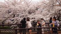 Cherry Blossom Viewing by Bicycle including a Picnic in Nagoya, 名古屋