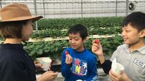 Fruit Picking and BBQ at a Farm in Aichi, Nagoya, Food Tours