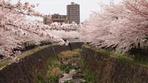 Private Cherry Blossom Highlights Tour in Nagoya, 名古屋