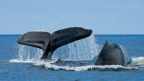 San Diego Summer Whale Watching Expedition Cruise, San Diego, Day Cruises