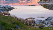 Fjord Excursion Including Mountain and Sea Arctic Scenery from Tromso, Tromso, Half-day Tours