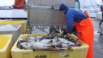 Polar Fishing Adventure from Tromso, Tromso, Fishing Charters & Tours