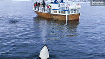 Roving Whale and Seabird Safari from Tromso, Tromso, Day Cruises