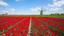 Holland in One Day Sightseeing Tour, Amsterdam