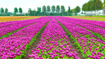 Keukenhof Garden Private Transfer with Entrance Tickets, Amsterdam, Sightseeing & City Passes