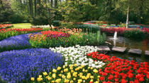 Keukenhof Gardens and Tulip Fields Tour from Amsterdam, Amsterdam, Day Trips