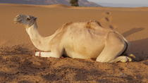3-Day Private Trip to the Draa Valley from Marrakech , Marrakech, Multi-day Tours