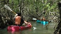 Damas Island Mangrove Kayaking Tour, Quepos