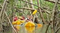 Damas Island Mangrove Kayaking Tour, Quepos, Kayaking & Canoeing