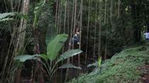 St Kitts Rainforest Nature Tour, St. Kitts