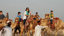 Camel Ride Desert Safari Tour from Doha, Doha, Nature & Wildlife