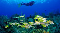 No Certification Required Guided Scuba Diving Tour, Key West