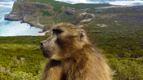 Full-Day Cape Point, Seal Island and Boulders Penguin Sanctuary Tour from Cape Town, Cape Town, ...