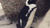 Full-Day Private Tour of Kalk Bay, Simons Town and Boulders Penguin Colony from Cape Town, Cape ...