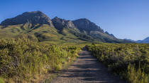 Half-day Private Hiking Tour in Helderberg Nature Reserve, Cape Town, Day Trips