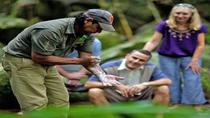 Mossman Gorge, Aboriginal Dreamtime Walk and Daintree River Crocodile Cruise Day Trip, Cairns & ...
