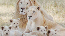 Lion Park Tour from Johannesburg or Pretoria, Johannesburg, Day Trips