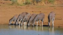 Pilanesberg Day Tour from Johannesburg or Pretoria, Johannesburg