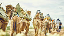 4-Day Small Group Camel Riding Trek from Wonoka Station, South Australia, Multi-day Tours