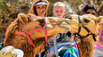 Camel Ride and Animal Sanctuary Tour in Los Cabos, Los Cabos, Nature & Wildlife