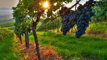 Private Wine Tour: Maipu Wineries from Mendoza, Mendoza, Multi-day Tours