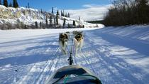 Half-Day Dog Sledding: The Takhini Express, Whitehorse, Ski & Snow
