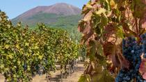 Positano winery and Pompeii, Naples, Wine Tasting & Winery Tours