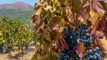 Shared tour Positano winery and Pompeii, Naples, Wine Tasting & Winery Tours