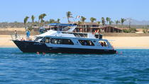 Los Cabos Snorkel Lunch Cruise with Open Bar, Los Cabos, Day Cruises