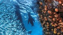 Snorkeling Adventure at Espiritu Santo Island National Park, La Paz, Day Cruises