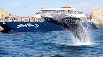 Whale Watching Brunch Cruise in Los Cabos, Los Cabos, Dolphin & Whale Watching