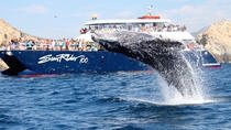 Whale Watching Dinner Cruise in Los Cabos, Los Cabos, Dolphin & Whale Watching