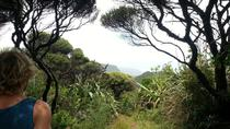 Full-Day Piha and Waitakere Ecotour Including Lunch from Auckland