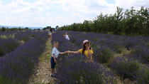 Lavender fields wine tasting at Chateau de Berne  Moustiers Grand Canyon Verdon, Cannes