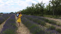 Lavender fields wine tasting at Chateau de Berne  Moustiers Grand Canyon Verdon, Nizza