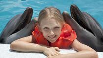 Punta Cana Dolphin Swim Experience, Punta Cana, Swim with Dolphins