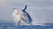 Samana Day Trip and Whale Watching Excursion from Punta Cana, Punta Cana, Dolphin & Whale Watching