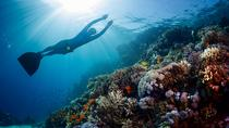 Full-Day Discover Freediving at Koh Tao from Koh Samui, Koh Samui, Other Water Sports