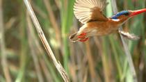 Full-Day Birding Photography Tour on the Garden Route, Garden Route, Nature & Wildlife