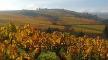 Beaujolais Half Day Wine Tasting Tour , Lyon, Private Sightseeing Tours