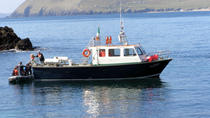 Dolphin and Whale Watching Tour from Dingle, Dingle, Dolphin & Whale Watching