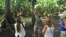 One Night Stay Jungle Lodge Monkey Sanctuary and Cacao, San Salvador, Overnight Tours