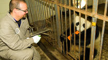 One-Day Dujiangyan Giant Panda Base Volunteering and Irrigation System Tour, Chengdu, Custom ...