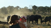 6-Day Victoria Falls and Hwange National Park Safari Adventure from Victoria Falls, Victoria Falls, ...