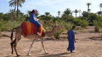 Desert Camel Ride in Marrakech, Marrakech, Nature & Wildlife