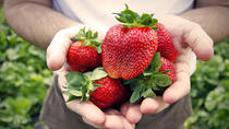 Private Day Trip: Greenhouse Strawberry Picking and Beijing Aviation Museum Visiting from Beijing,...