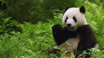 Private Half Day Tour to Beijing Panda House and Summer Palace, Beijing, Half-day Tours